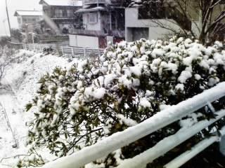 雪が積もりましたね