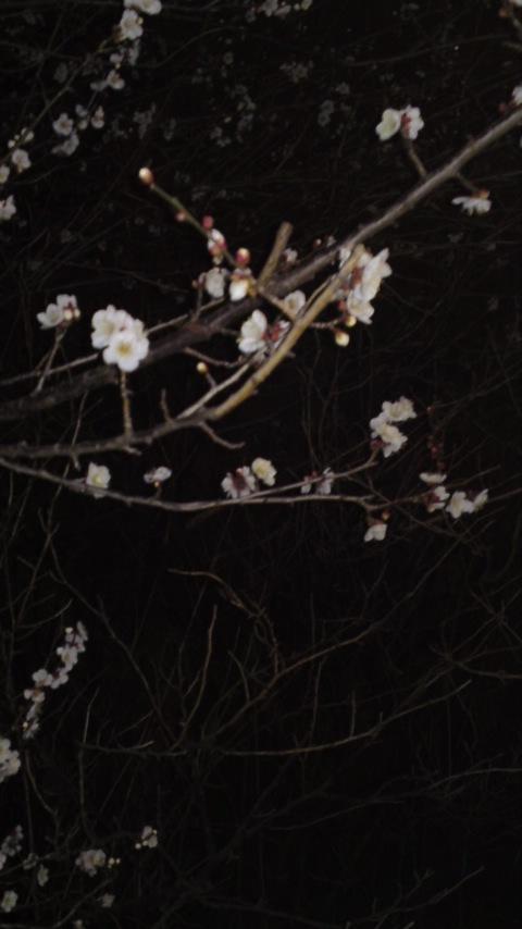 ☆春の訪れ?!☆