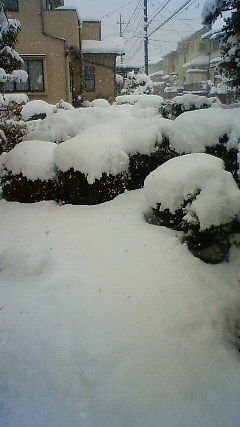 先日の・・・雪