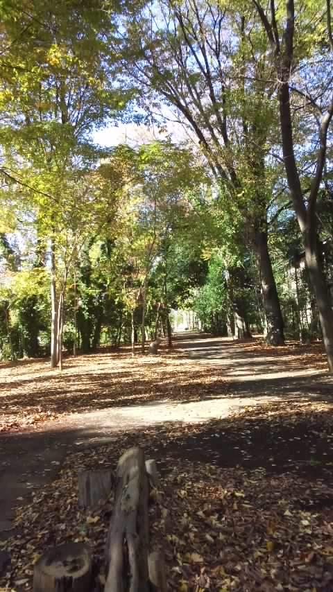 仲田の森の風景